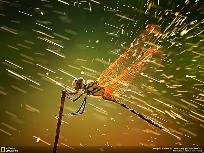 Las 50 mejores fotografías de National Geographic